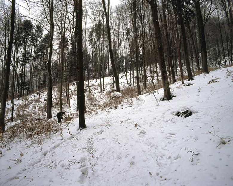 Rabbit source III, winter
