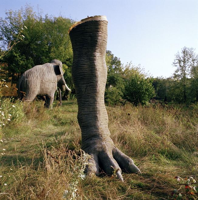 Dinosaur leg