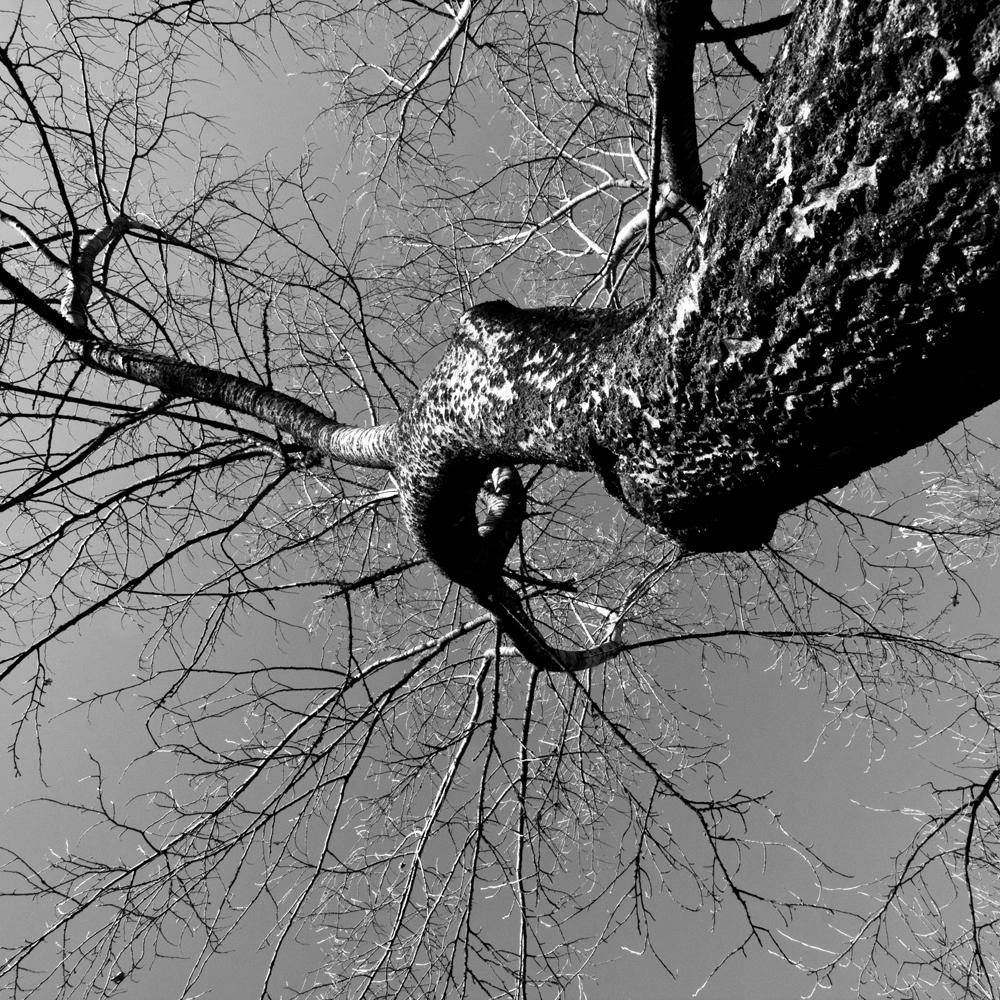 FABIENLECOQ.TREESOME-01