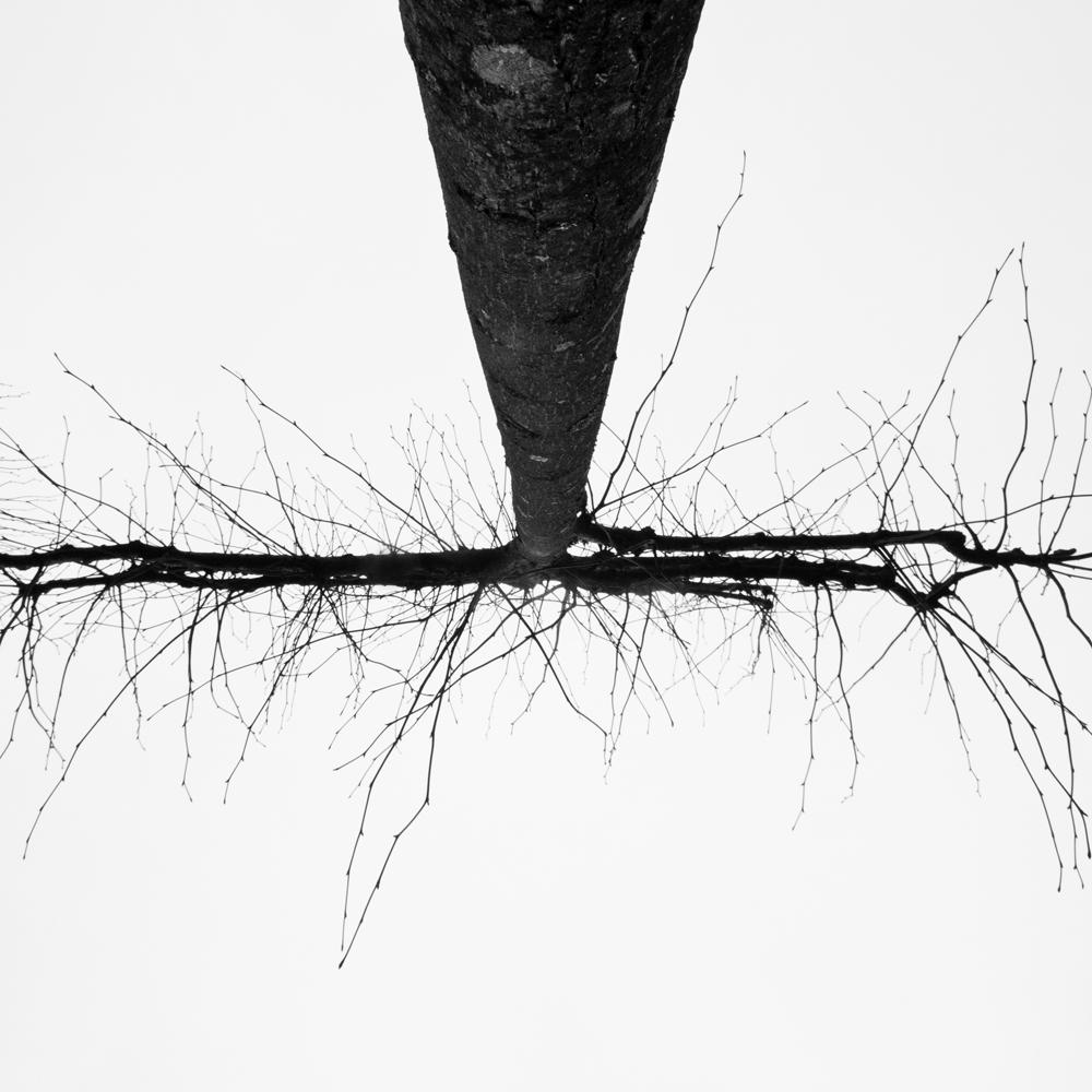 FABIENLECOQ.TREESOME-06