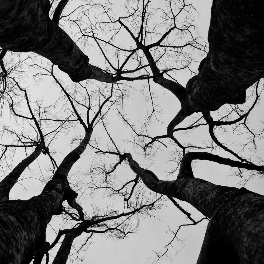 FABIENLECOQ.TREESOME-21