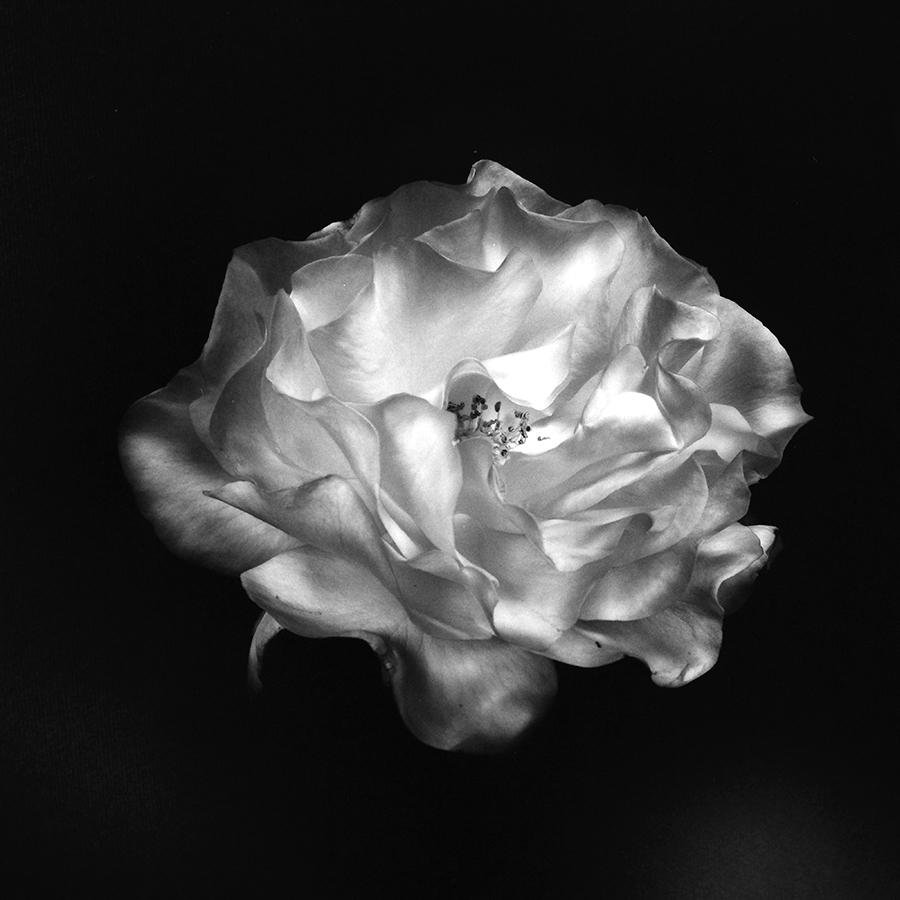 Ksenija Spanec - Flower Portraits - IMG_0006