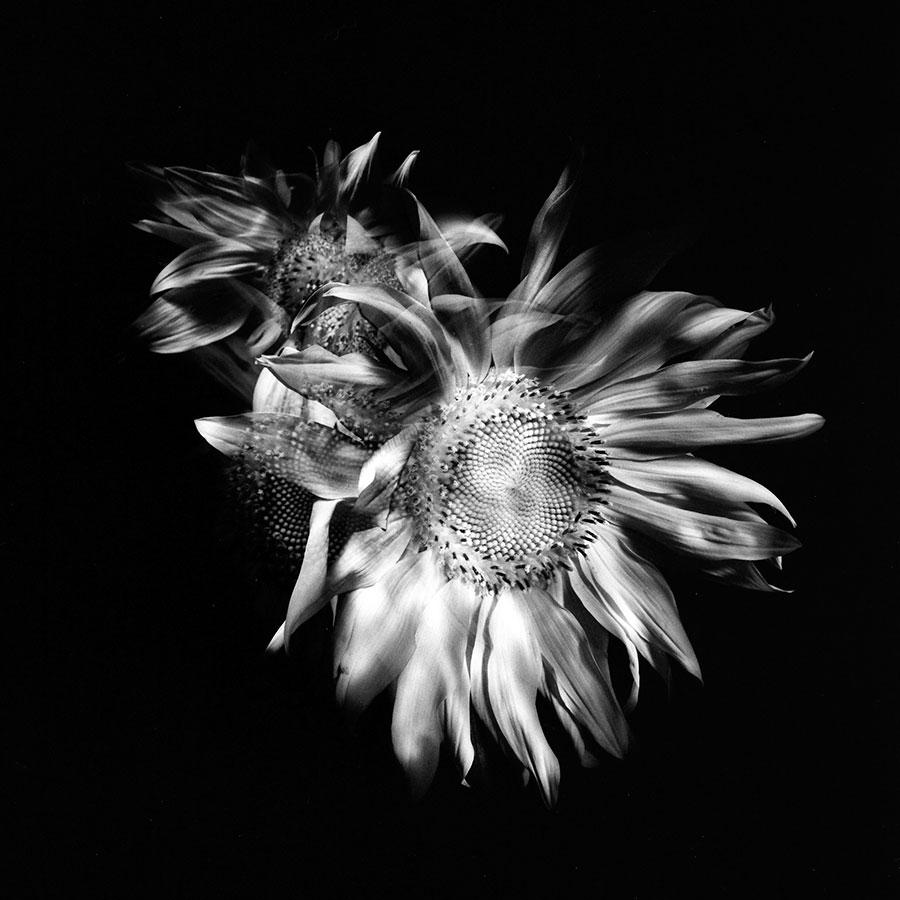 Ksenija Spanec - Flower Portraits - IMG_000m4