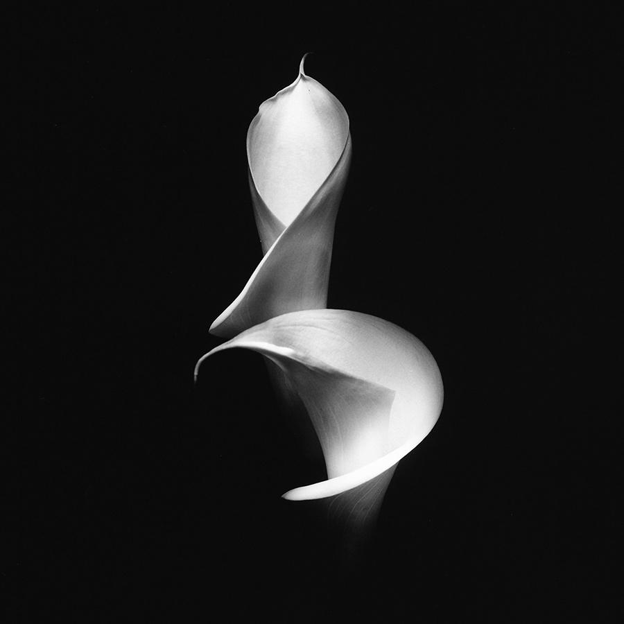 Ksenija Spanec - Flower Portraits - IMG_0010_1