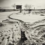Andrei Baciu - The Life and Happenings around Blejoi Bridge