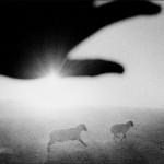 Matt Black – Kingdom of Dust