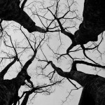 Fabien Le Coq - Treesome