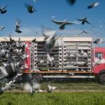Oliver Merce – Racing Pigeons