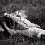 Daniel Munteanu - Wooden Creatures